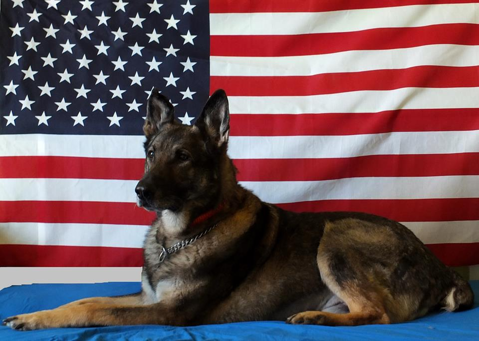"photo essay about u.s. war dogs War dogs by rebecca frankel had just put together a photo essay called ""war dog an engagingly written look at dogs and their handlers in the us."