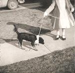 Cuddles 1959