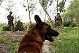 04/05/2011 - Pablo, a military working dog, rests on the ground while his handler, U.S. Marine Corps Lance Cpl. David Pond, left, and Lance Cpl. Jesse Helsley investigate a possible improvised explosive device during a security patrol near Nahr-e-Saraj, Afghanistan, April 5, 2011. Pond and Helsey, assigned to Company I, Battalion Landing Team, ...