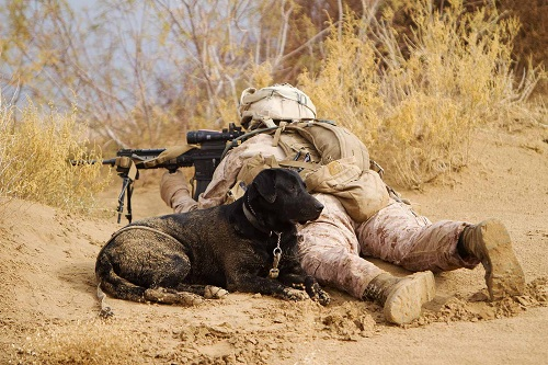 Has Your Back  = U.S. Marine Lance Cpl. B. M., a dog handler with A Company, sights in with his infantry automatic rifle while providing security with Ty, an improvised explosive device detection dog, during a patrol, Feb. 16, 2012. DoD photo by Cpl. Alfred V. Lopez
